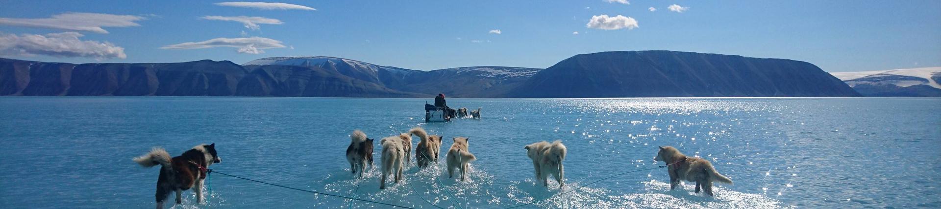 """计划收购格陵兰岛域名,特朗普""""买岛""""是认真的!"""